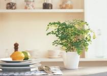 Consejos de plantas para interior