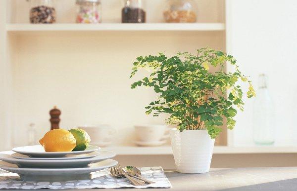 planta de interior en la cocina