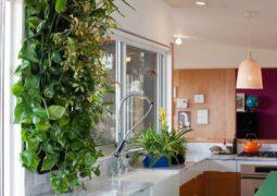 Jardines verticales, una opción verde para exteriores e interiores